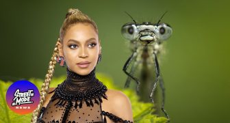 Biology Rocks! Τι σχέση έχουν οι stars με τα έντομα και τα μαλάκια;